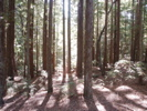 200210-05-1512-foresty
