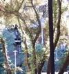 200210-05-1604-kzsc_trees